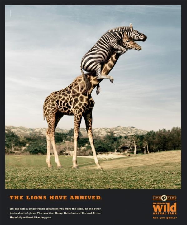 san-diego-zoo-robert-small-59461